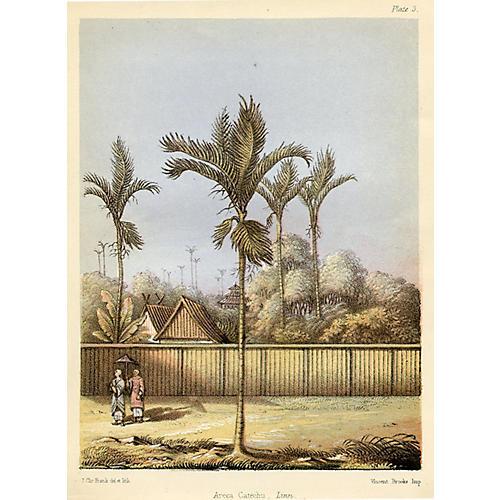Areca Palm Tree, 1856