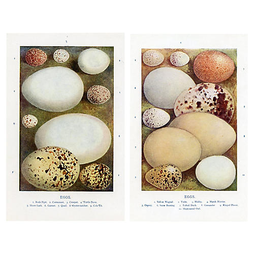 Bird Egg Prints, Pair