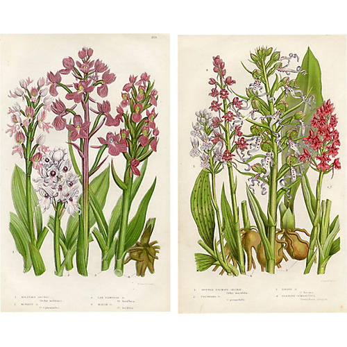 19th-C. British Orchid Prints, Pair