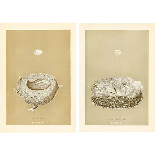 19th-C. Nest & Egg Prints, Pair