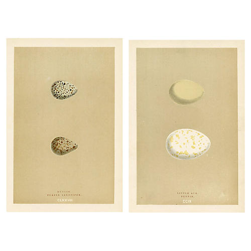 19th-C. Shorebird Egg Prints, Pair