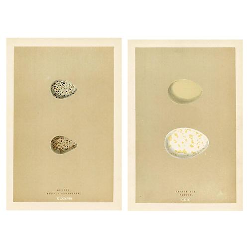 19th-C. Shorebird Egg Prints, Pair