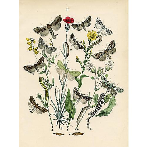 European Moth Print, 1882