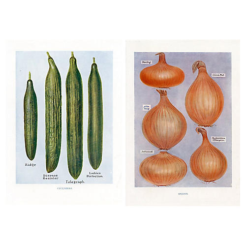 Cucumber & Onion Prints, Pair