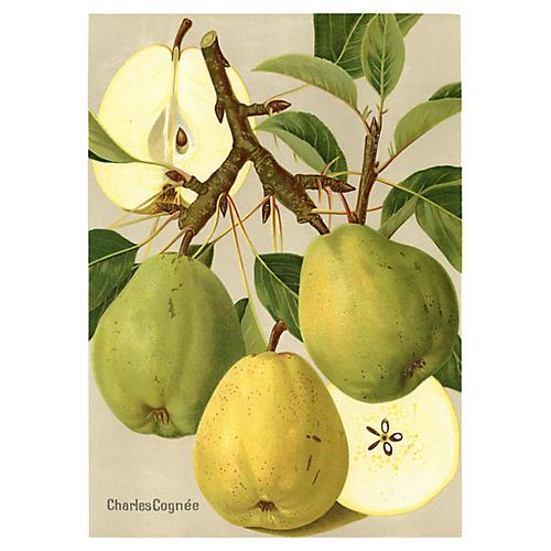 German Pear Print, 1908