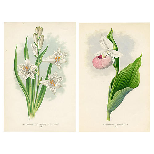 Lily & Lady's Slipper Prints, Pair