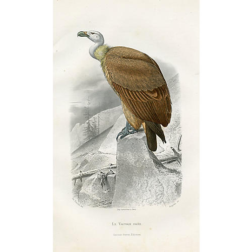 19th-C. French Vulture Print