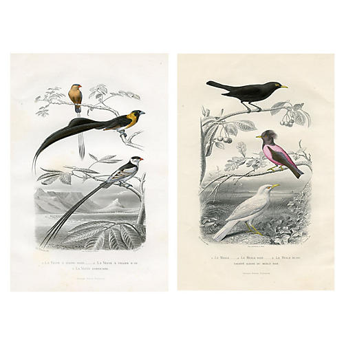 19th-C. French Bird Prints, Pair