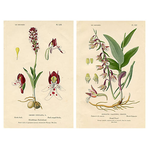 European Orchid Prints, Pair