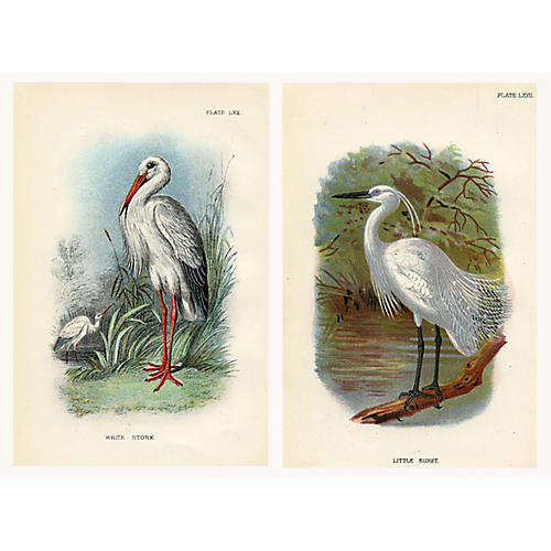 19th-C. Stork & Egret Prints, Pair