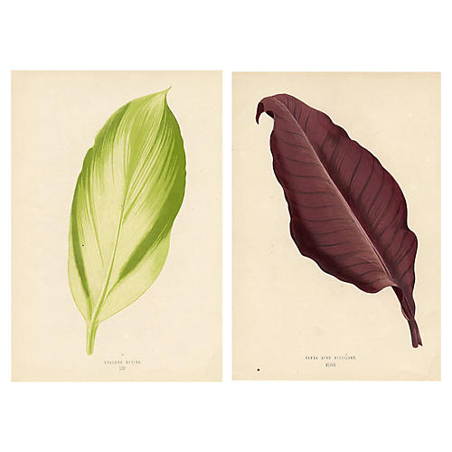 19th-C. Leaved Plant Prints, Pair