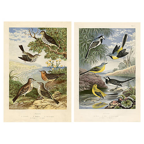 19th-C. Pipit & Wagtail Prints, Pair