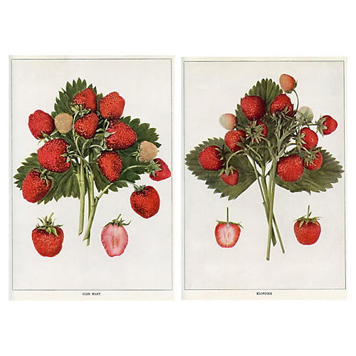 North American Strawberries, Pair