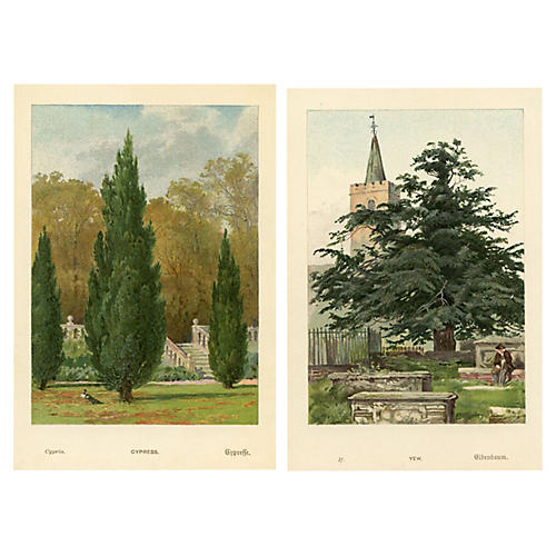19th-C. English Tree Prints, S/2