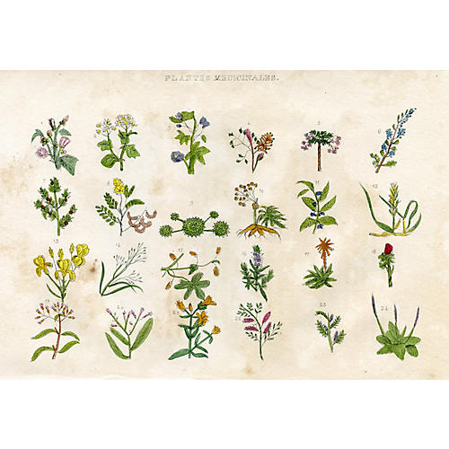 French Medicinal Plants Engraving, 1830