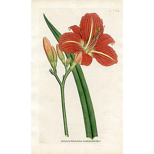 Chinese Daylily Engraving, 1788