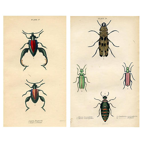1830s English Beetle Prints, Pair
