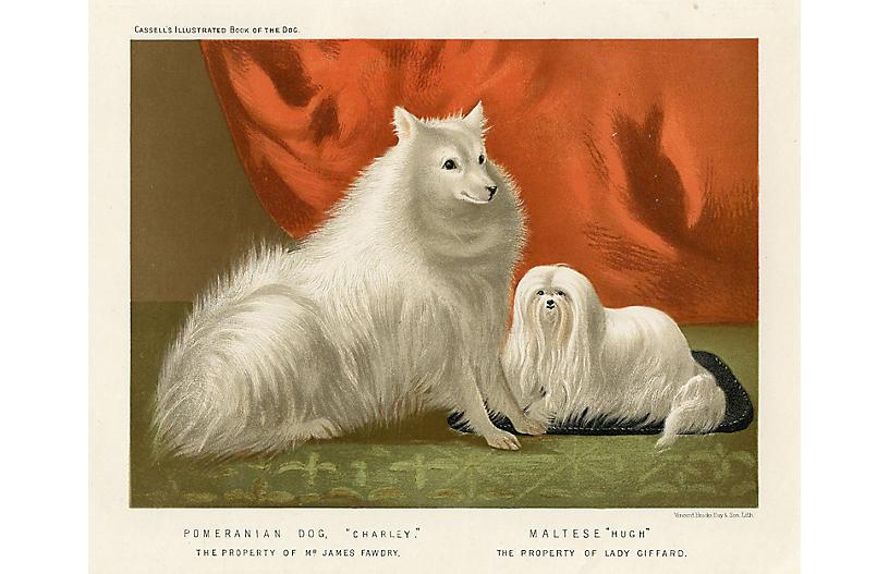 19th-C. Pomeranian & Maltese Print