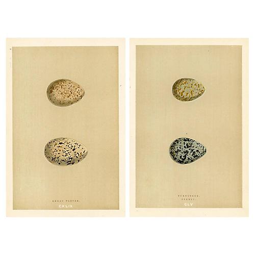 19th-C. Shorebird Eggs, Pair
