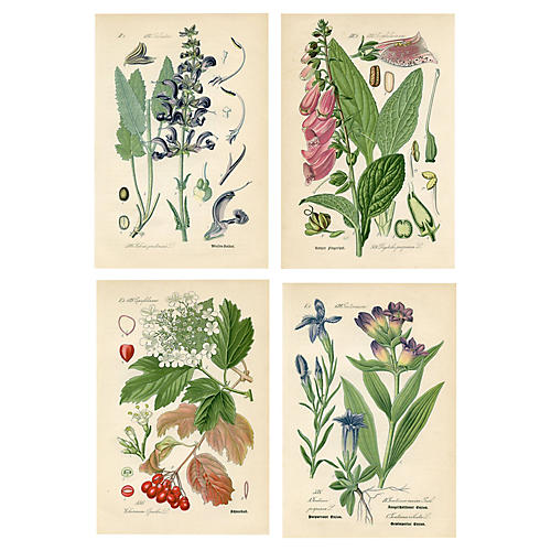 19th-C. German Botanical Prints, S/4