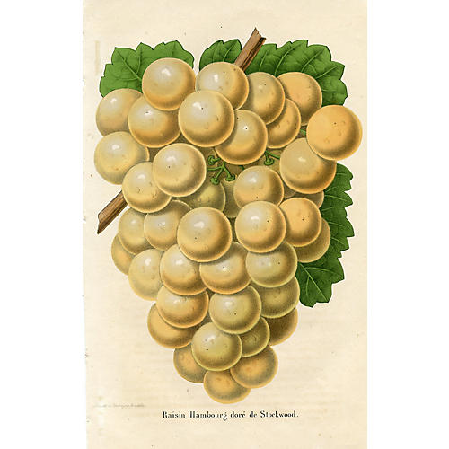 Belgian Grape Print, 1857