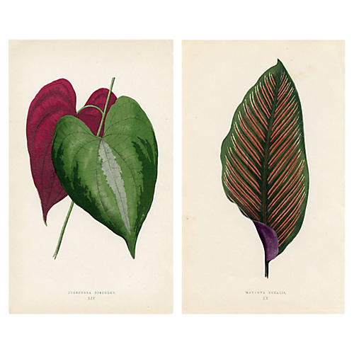 19th-C. Leaf Prints, Pair