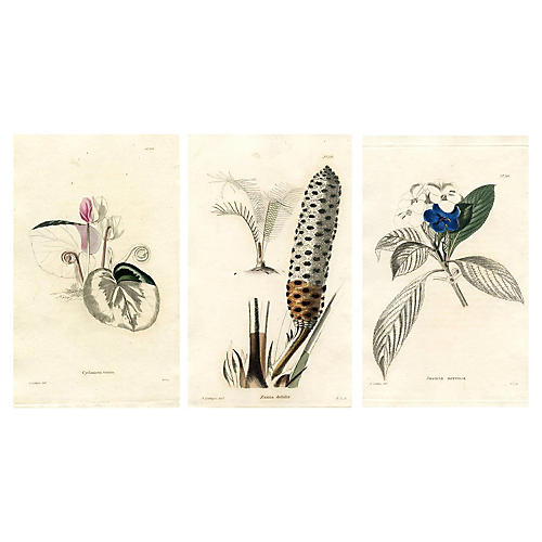 19th-C. English Botanical Prints, S/3
