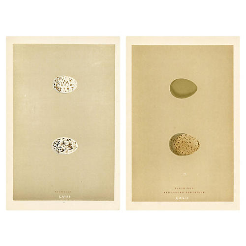 Partridge & Nightjar Egg Prints, Pair