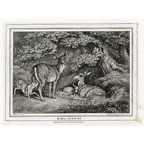 Does & Fawns Engraving, 1812