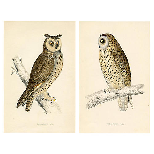 1880s Owl Engravings, Pair