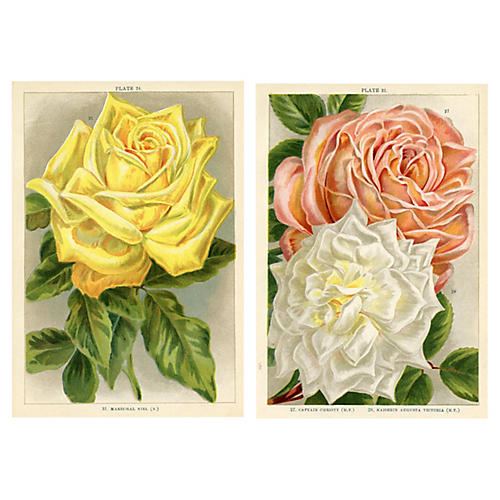 English Rose Prints, Pair