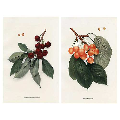 Cherries of New York, Pair