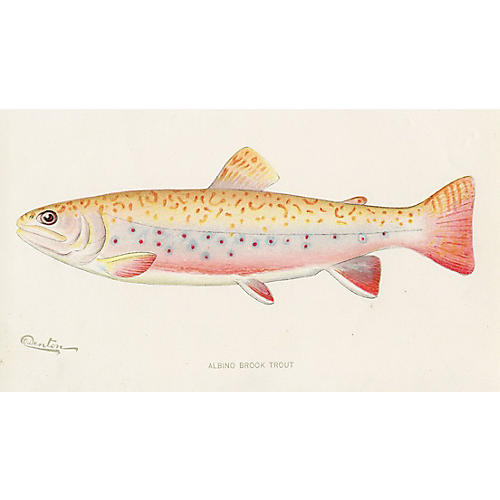 Brook Trout by Sherman Denton, 1902