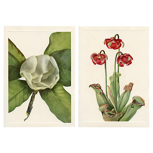 North American Wildflower Prints, Pair