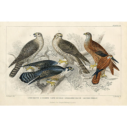 Birds of PreyLithograph, C. 1850