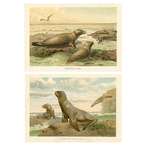 1890s Seal & Sea Lion Prints, Pair