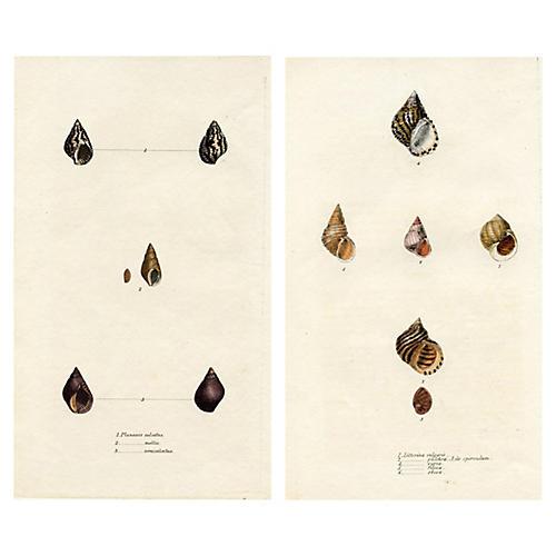 19th-C. Seashell Engravings, Pair