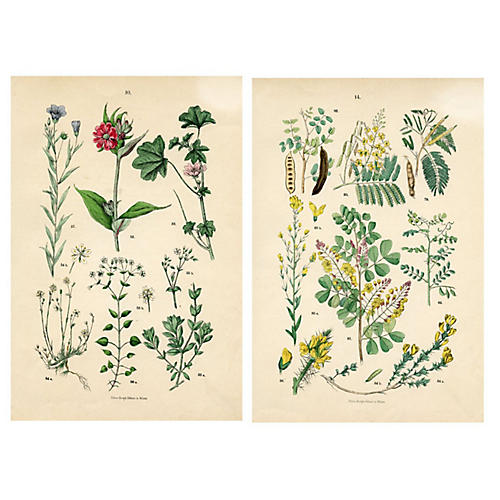19th-C. Italian Botanical Prints, Pair