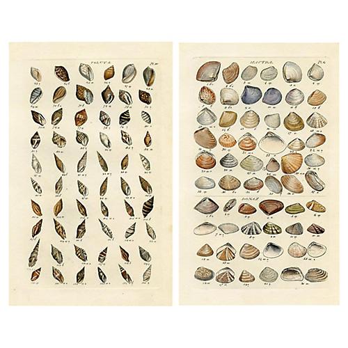 1850s Seashell Engravings, Pair