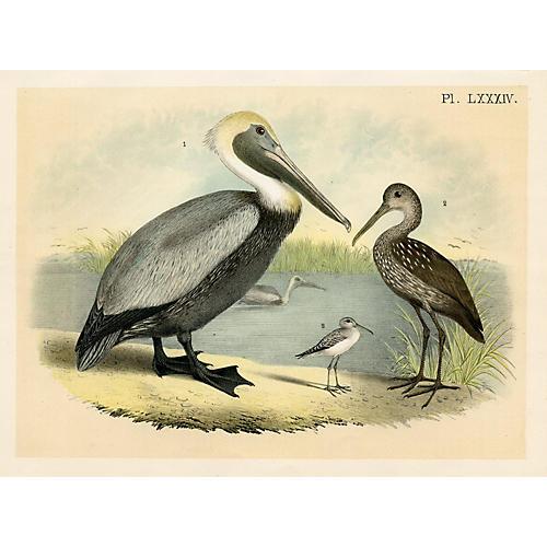 Pelican & Sandpiper, 1884