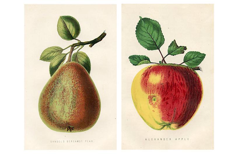 19th-C. Apple & Pear Prints, S/2
