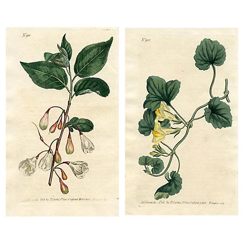 Curtis Botanical Prints, early 1800s, Pr