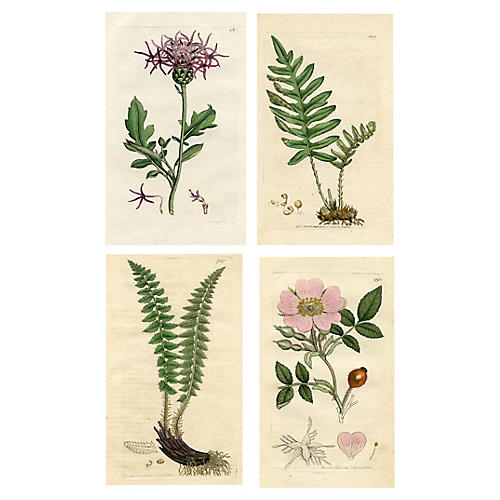 Botanical Engravings by Sowerby, S/4