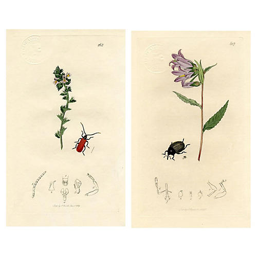 Beetle Prints by John Curtis, Pair
