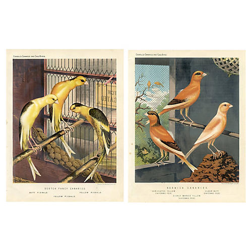 19th-C. Canary Prints, Pair
