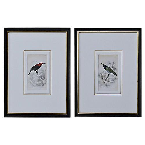 19th-C. Sunbird Prints, Pair