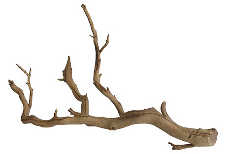 Preserved Driftwood Branch