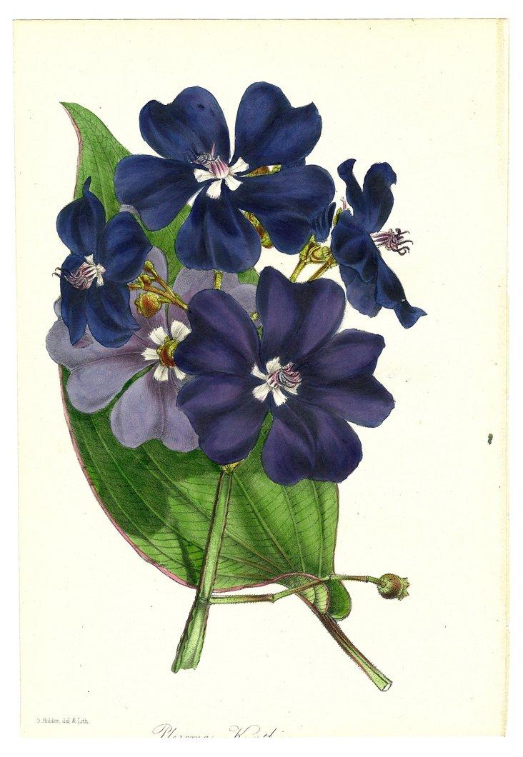 Navy     Botanical