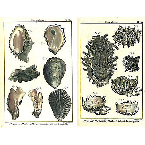 Diverse Shells, S/2