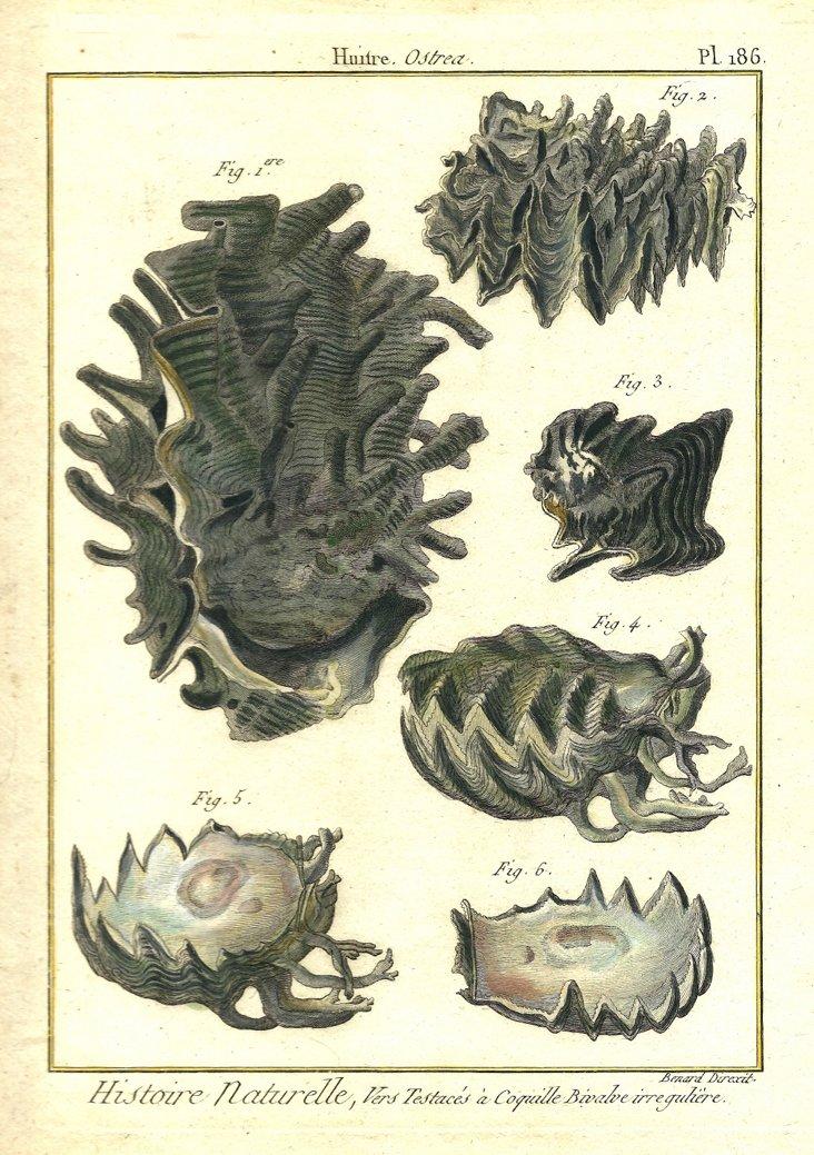 Six Shells
